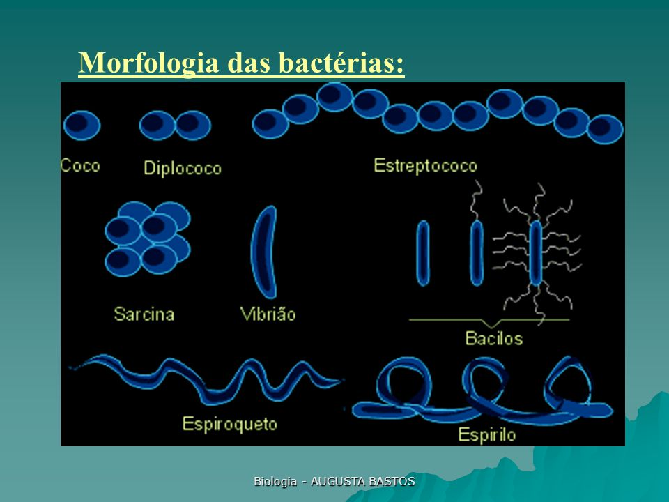 Biologia - AUGUSTA BASTOS