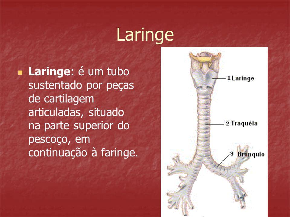 LaringeLaringe: é um tubo sustentado por peças de cartilagem articuladas, situado na parte superior do pescoço, em continuação à faringe.
