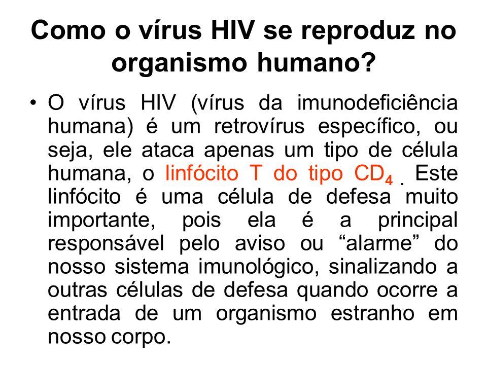 Como o vírus HIV se reproduz no organismo humano