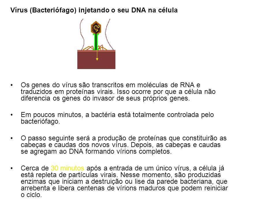 Vírus (Bacteriófago) injetando o seu DNA na célula