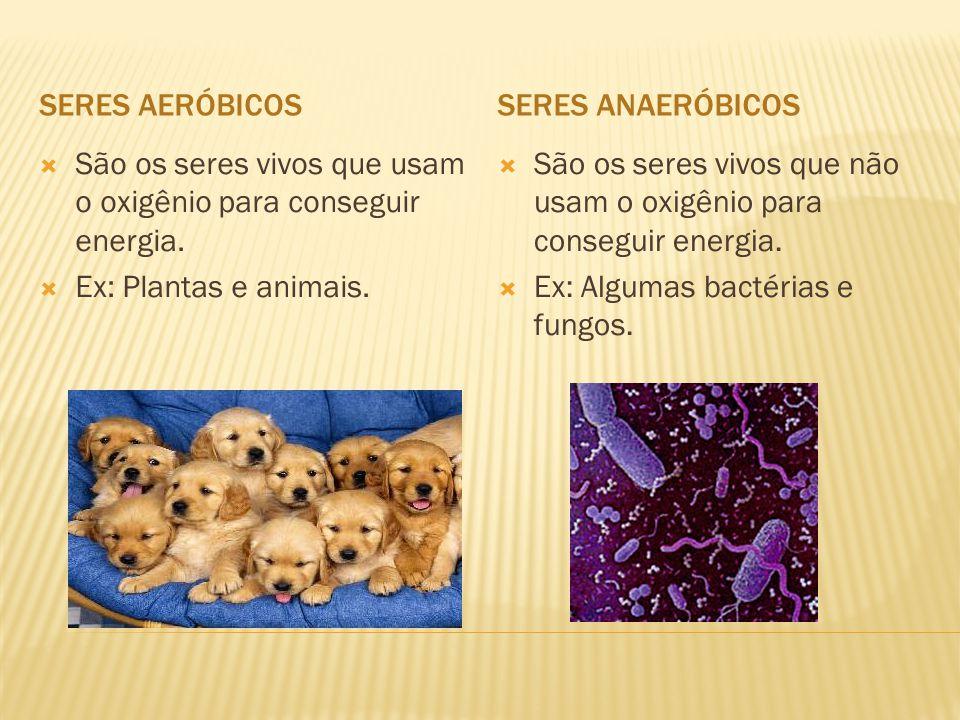 Seres aeróbicos Seres anaeróbicos. São os seres vivos que usam o oxigênio para conseguir energia. Ex: Plantas e animais.