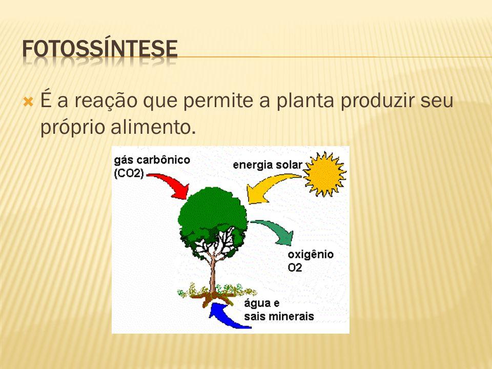 Fotossíntese É a reação que permite a planta produzir seu próprio alimento.