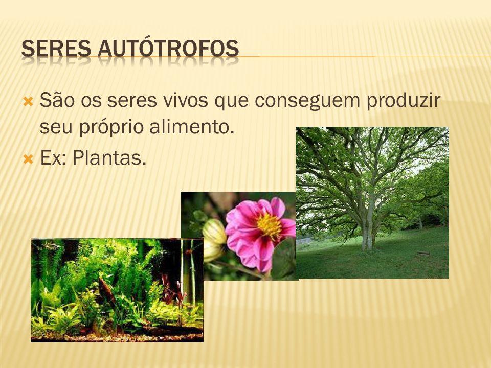 Seres autótrofos São os seres vivos que conseguem produzir seu próprio alimento. Ex: Plantas.