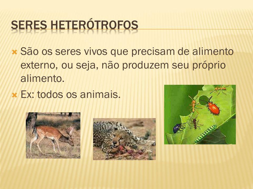 Seres heterótrofos São os seres vivos que precisam de alimento externo, ou seja, não produzem seu próprio alimento.