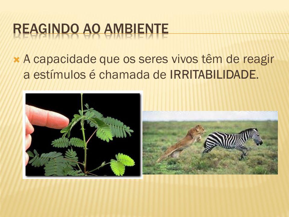 Reagindo ao ambiente A capacidade que os seres vivos têm de reagir a estímulos é chamada de IRRITABILIDADE.