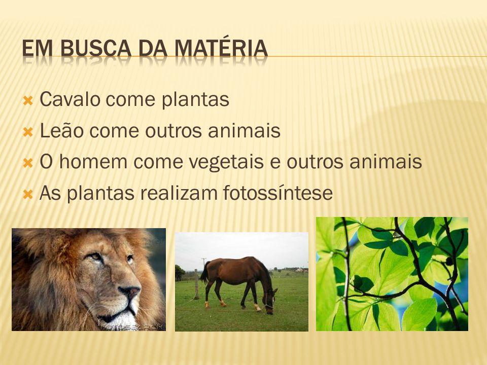 Em busca da matéria Cavalo come plantas Leão come outros animais