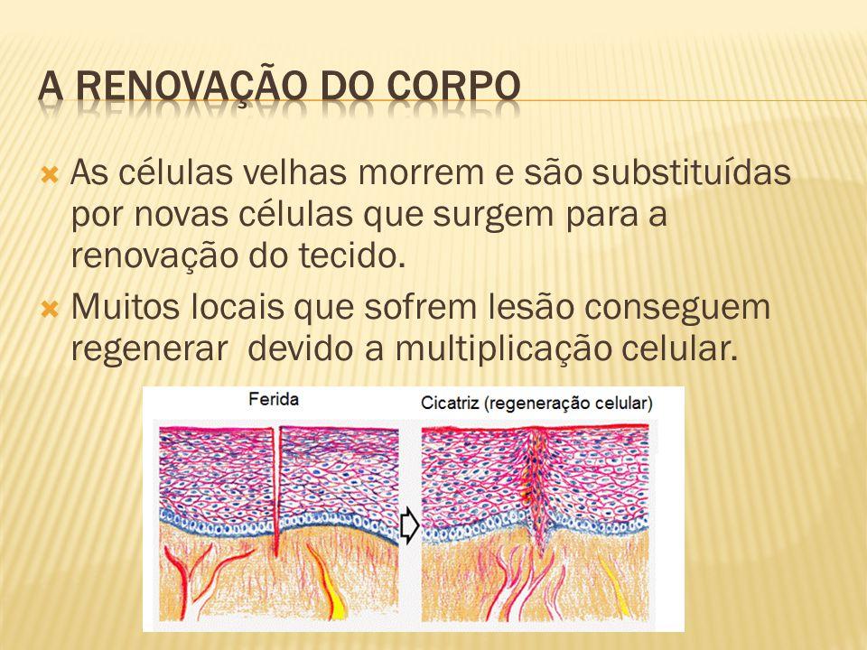 A renovação do corpo As células velhas morrem e são substituídas por novas células que surgem para a renovação do tecido.