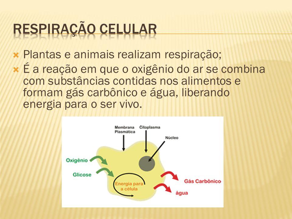 Respiração celular Plantas e animais realizam respiração;