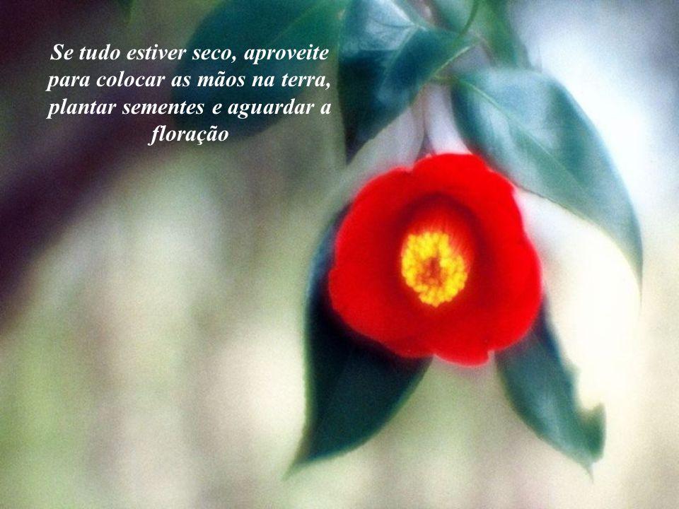 Se tudo estiver seco, aproveite para colocar as mãos na terra, plantar sementes e aguardar a floração