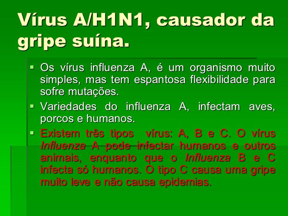 Vírus A/H1N1, causador da gripe suína.