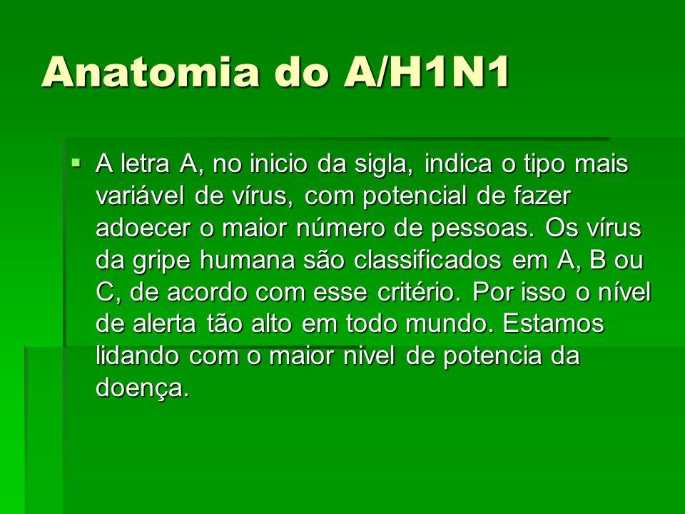 Anatomia do A/H1N1