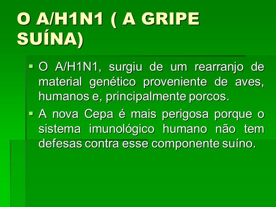O A/H1N1 ( A GRIPE SUÍNA) O A/H1N1, surgiu de um rearranjo de material genético proveniente de aves, humanos e, principalmente porcos.