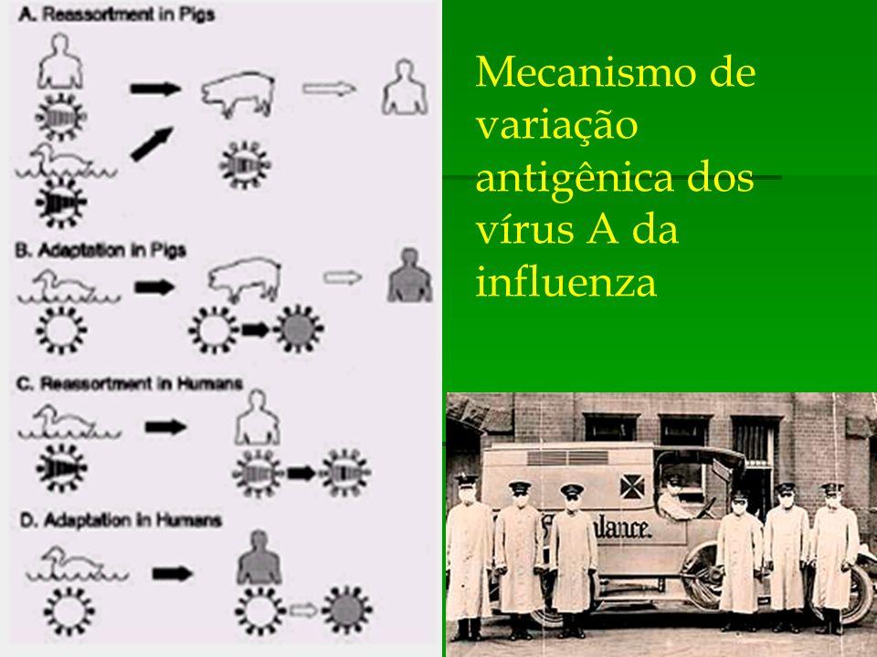 Mecanismo de variação antigênica dos vírus A da influenza