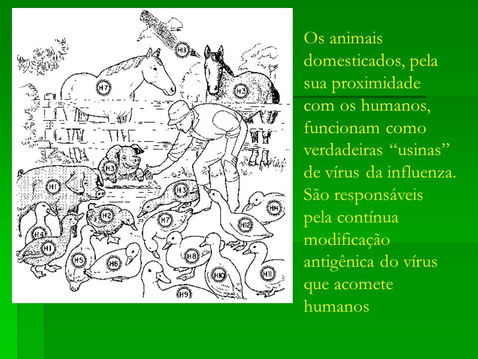 Os animais domesticados, pela sua proximidade com os humanos, funcionam como verdadeiras usinas de vírus da influenza.