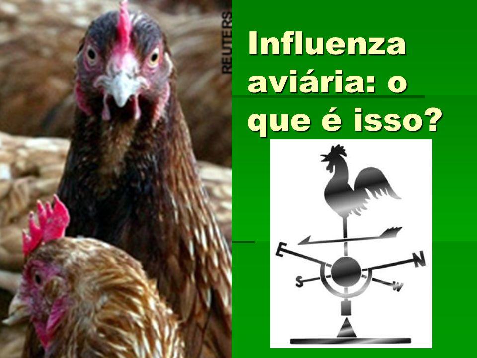Influenza aviária: o que é isso