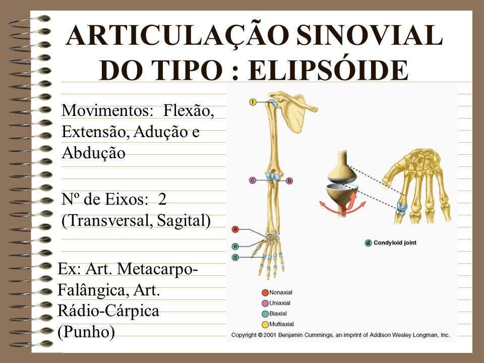 ARTICULAÇÃO SINOVIAL DO TIPO : ELIPSÓIDE