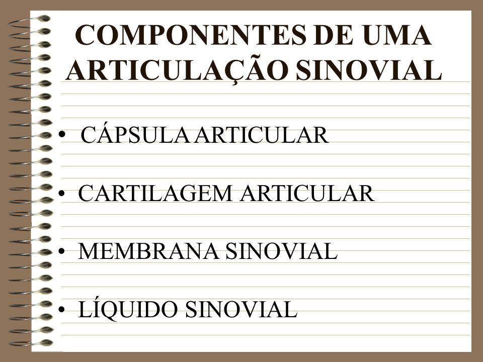 COMPONENTES DE UMA ARTICULAÇÃO SINOVIAL