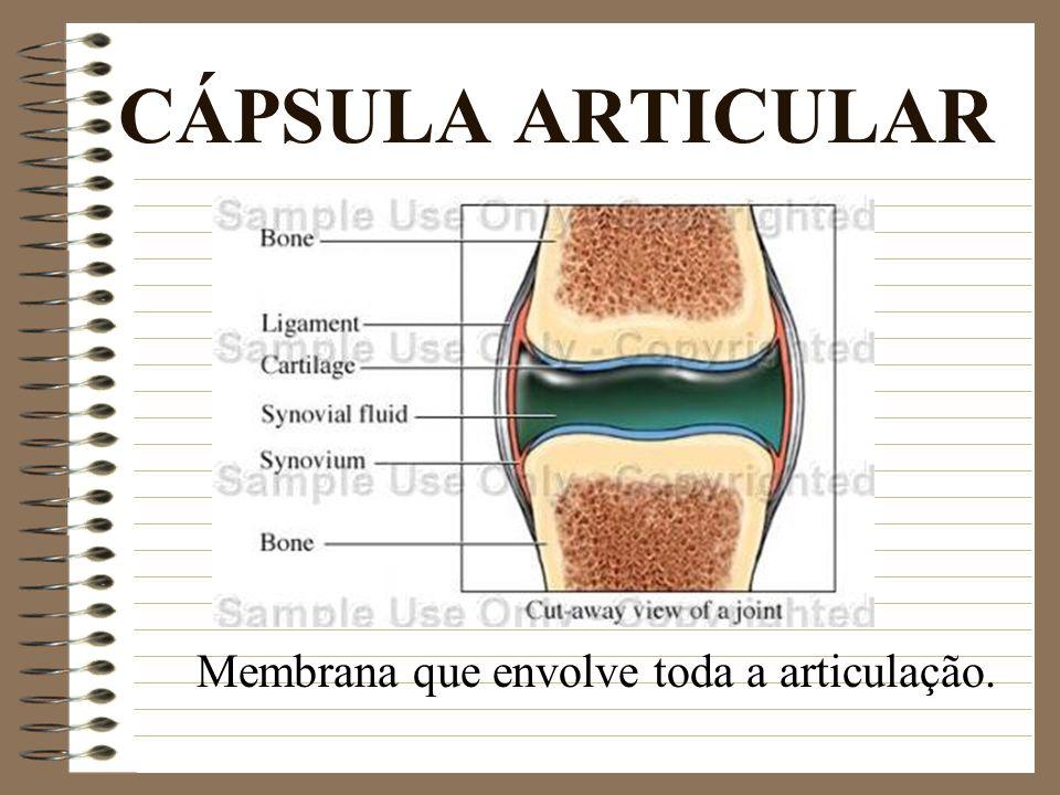 CÁPSULA ARTICULAR Membrana que envolve toda a articulação.