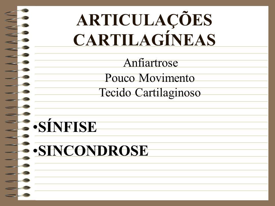 ARTICULAÇÕES CARTILAGÍNEAS