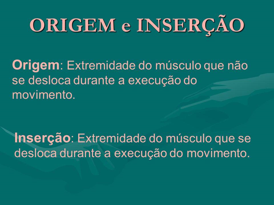 ORIGEM e INSERÇÃO Origem: Extremidade do músculo que não se desloca durante a execução do movimento.