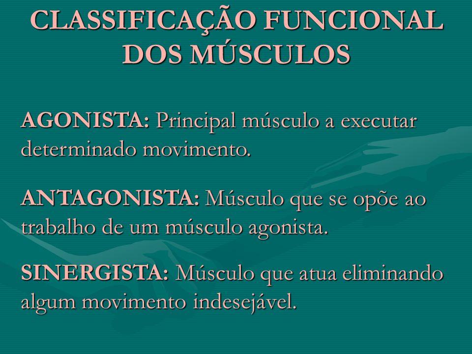 CLASSIFICAÇÃO FUNCIONAL DOS MÚSCULOS