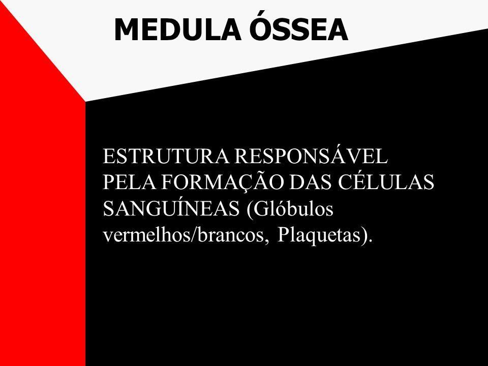 MEDULA ÓSSEA ESTRUTURA RESPONSÁVEL PELA FORMAÇÃO DAS CÉLULAS SANGUÍNEAS (Glóbulos vermelhos/brancos, Plaquetas).