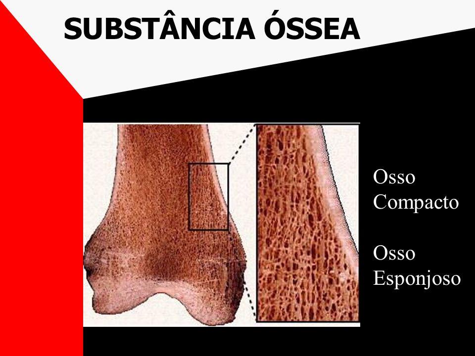 SUBSTÂNCIA ÓSSEA Osso Compacto Osso Esponjoso
