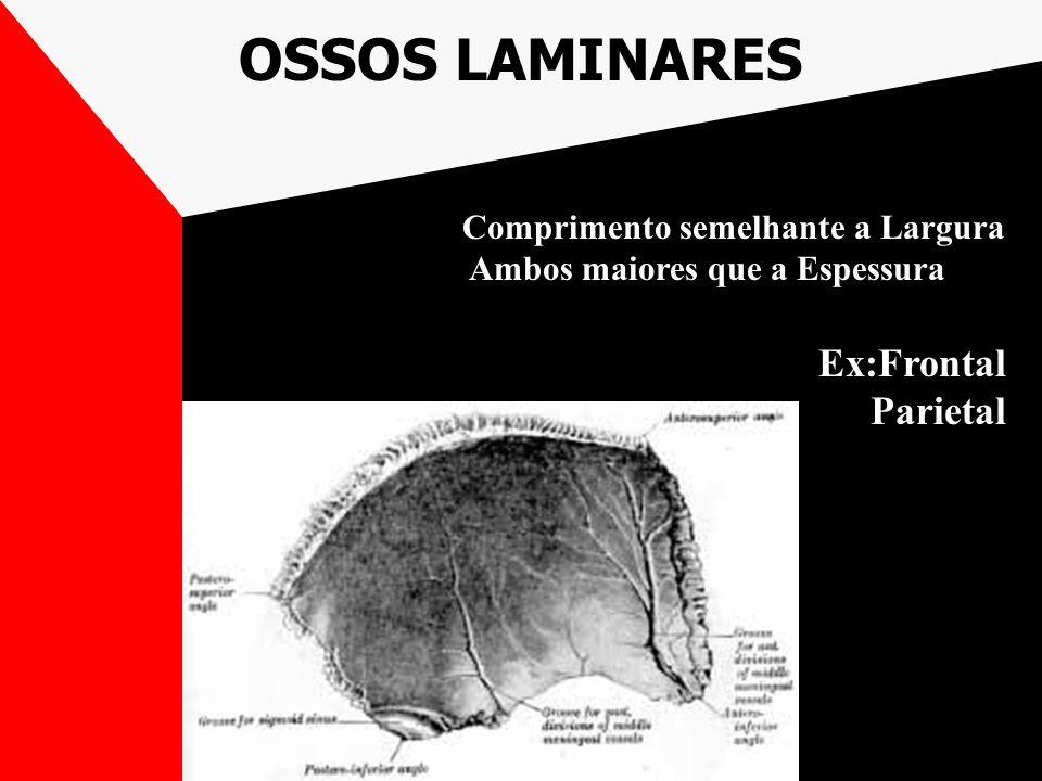 OSSOS LAMINARES Ex:Frontal Parietal Comprimento semelhante a Largura