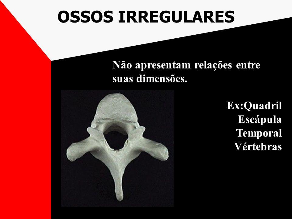 OSSOS IRREGULARES Não apresentam relações entre suas dimensões.