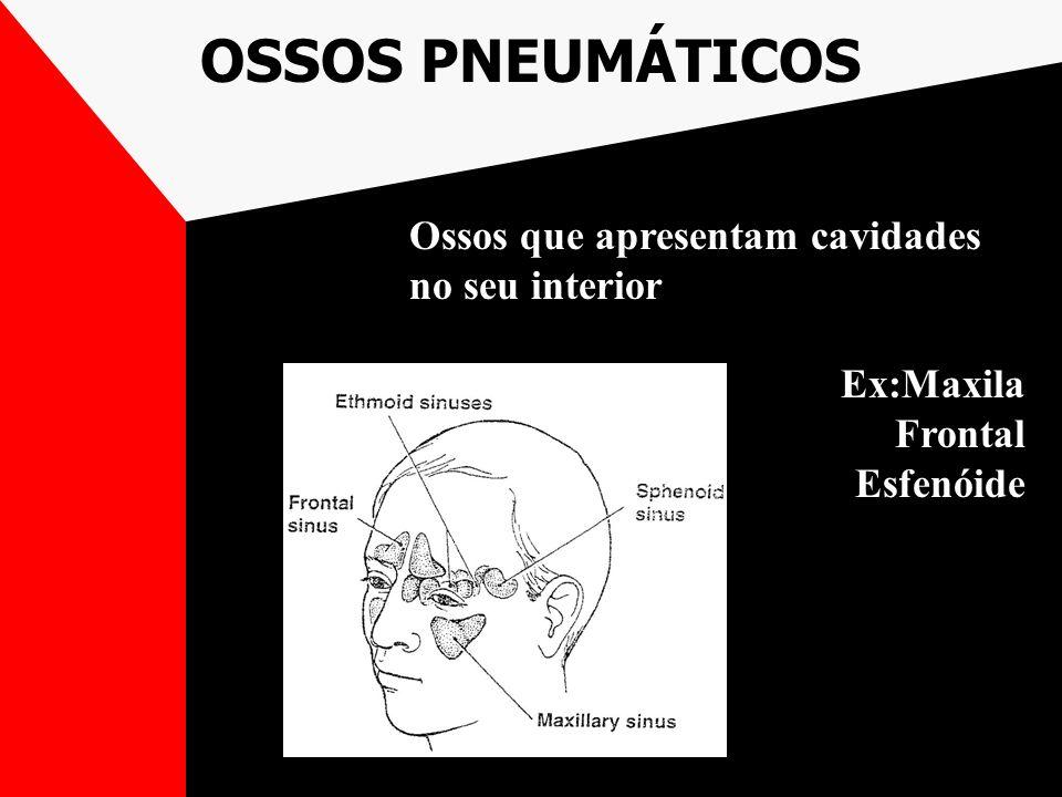 OSSOS PNEUMÁTICOS Ossos que apresentam cavidades no seu interior