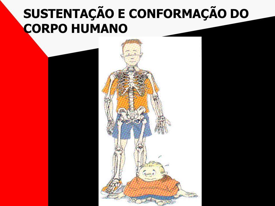 SUSTENTAÇÃO E CONFORMAÇÃO DO CORPO HUMANO