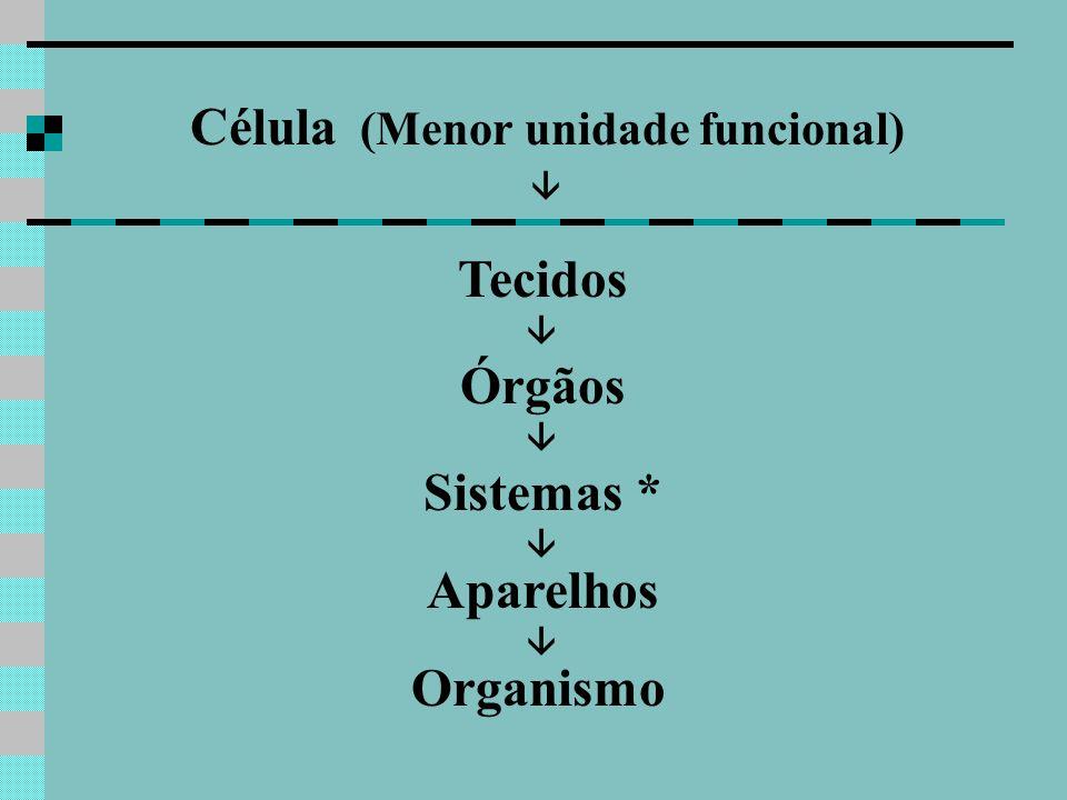 Célula (Menor unidade funcional)