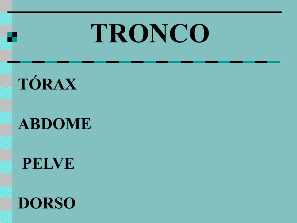TÓRAX ABDOME PELVE DORSO TRONCO