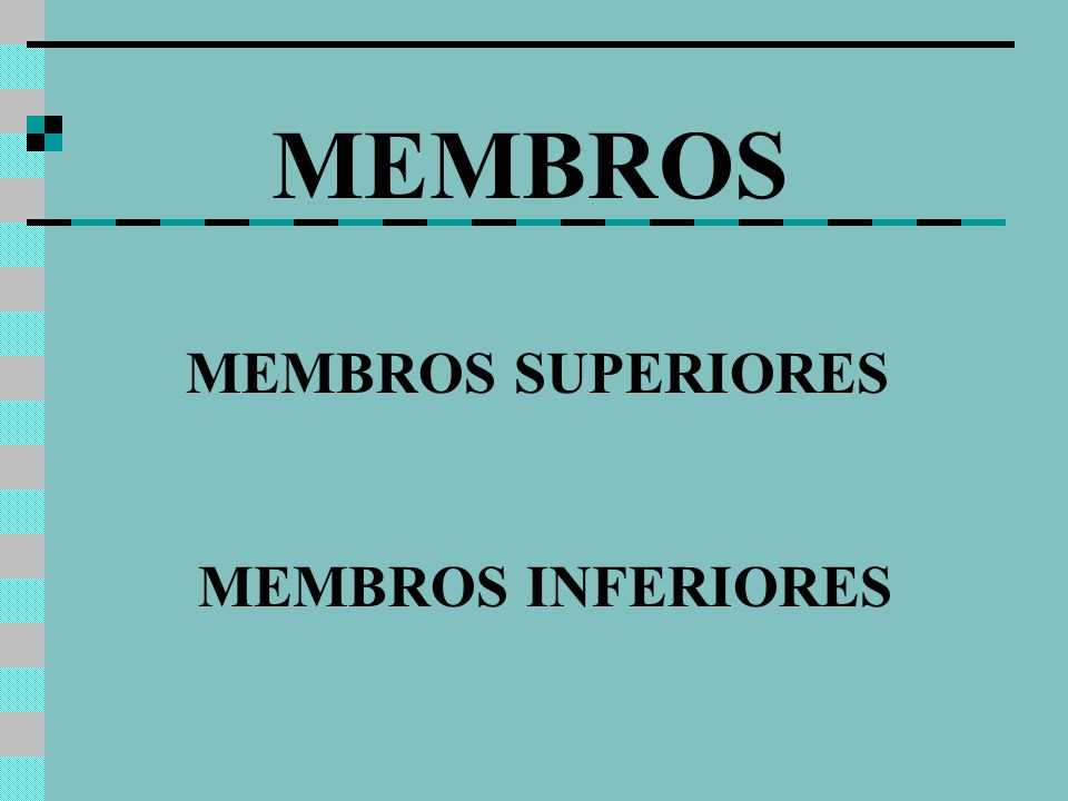 MEMBROS SUPERIORES MEMBROS INFERIORES MEMBROS