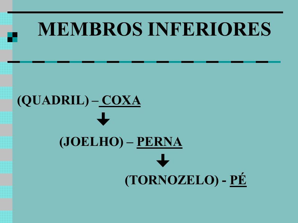 MEMBROS INFERIORES (QUADRIL) – COXA (JOELHO) – PERNA 