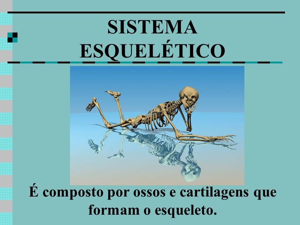 É composto por ossos e cartilagens que formam o esqueleto.