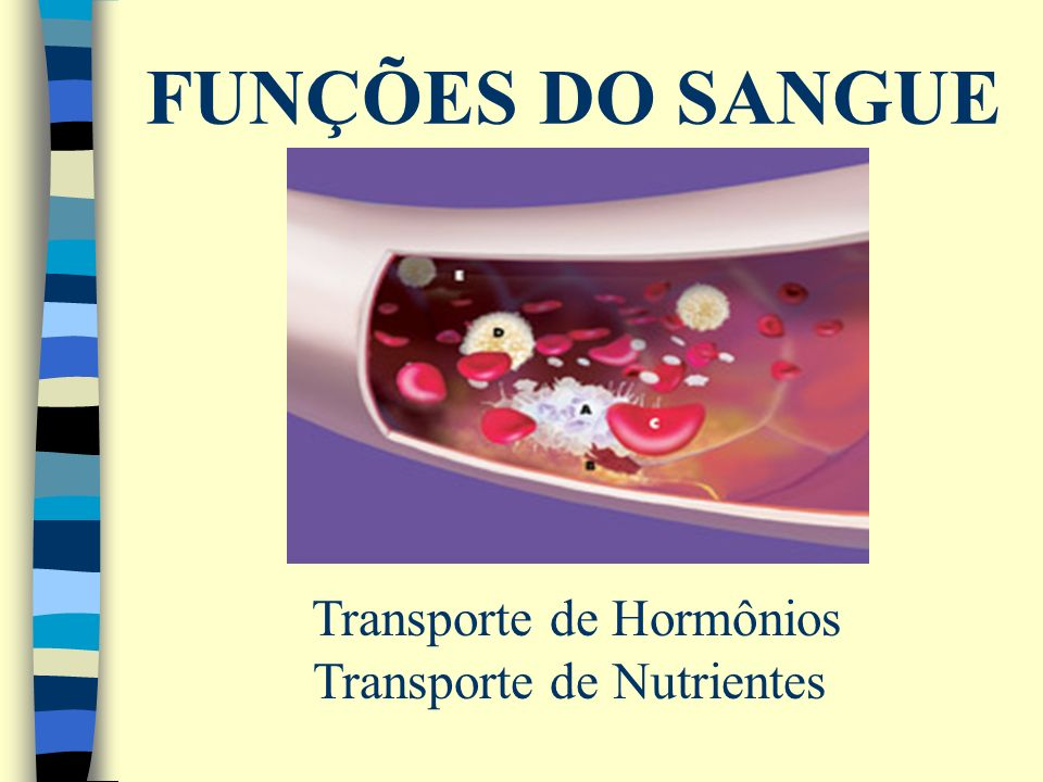 FUNÇÕES DO SANGUE Transporte de Hormônios Transporte de Nutrientes