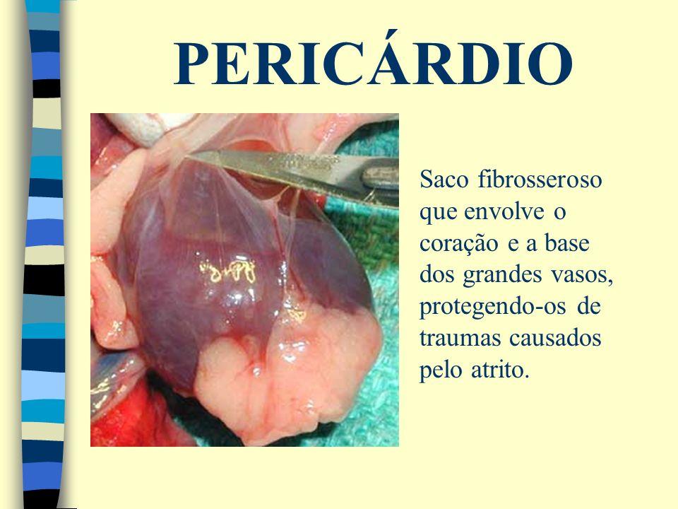 PERICÁRDIO Saco fibrosseroso que envolve o coração e a base dos grandes vasos, protegendo-os de traumas causados pelo atrito.