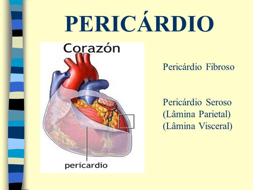 PERICÁRDIO Pericárdio Fibroso Pericárdio Seroso (Lâmina Parietal)