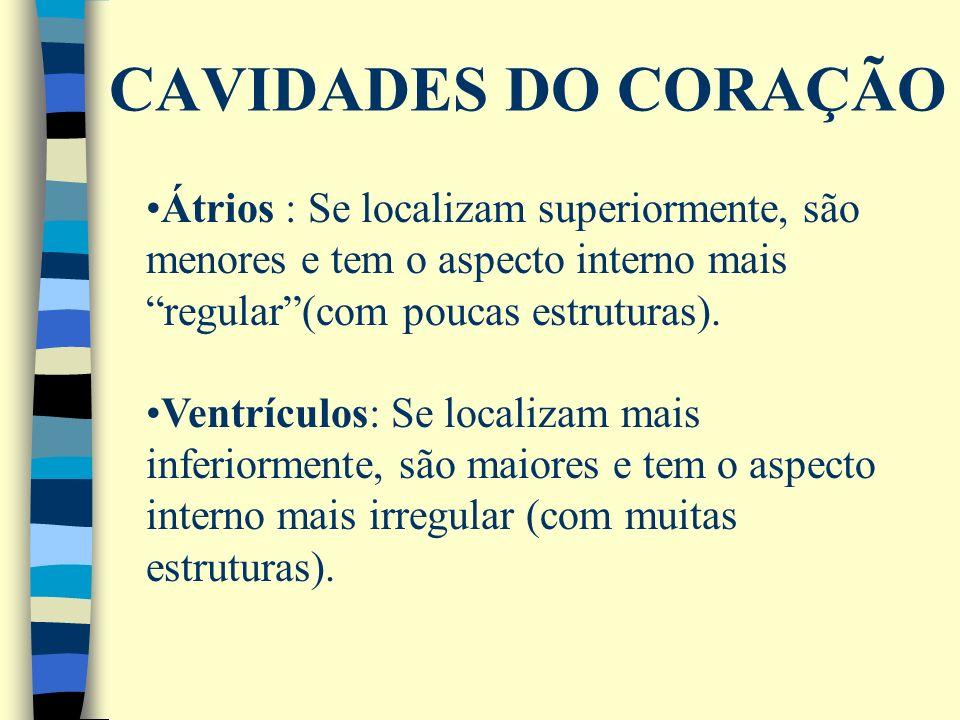 CAVIDADES DO CORAÇÃOÁtrios : Se localizam superiormente, são menores e tem o aspecto interno mais regular (com poucas estruturas).