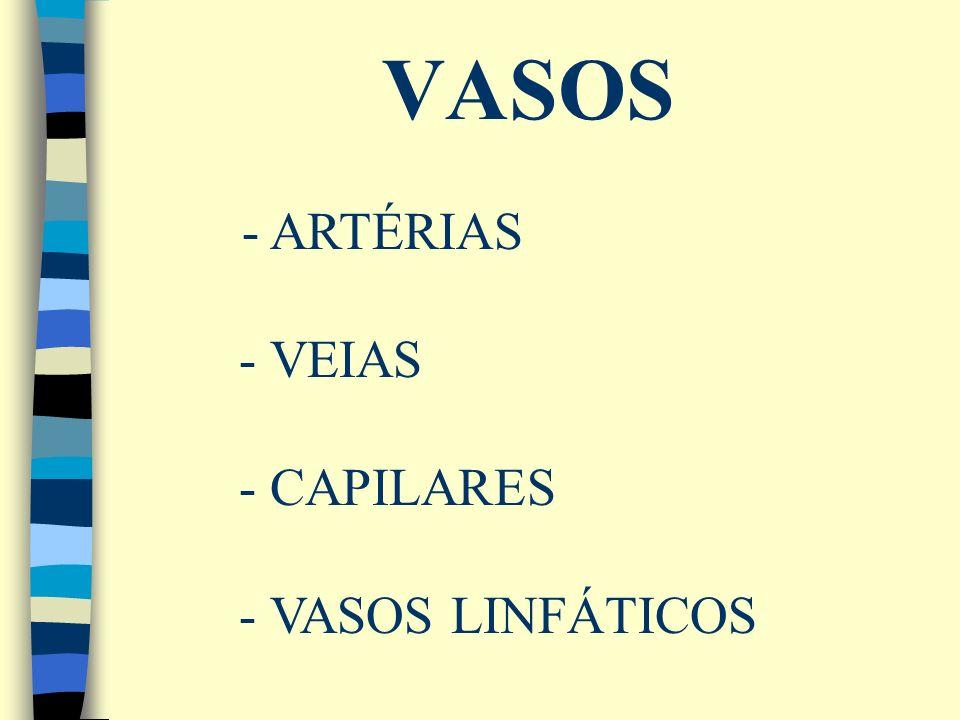 VASOS - ARTÉRIAS - VEIAS - CAPILARES - VASOS LINFÁTICOS