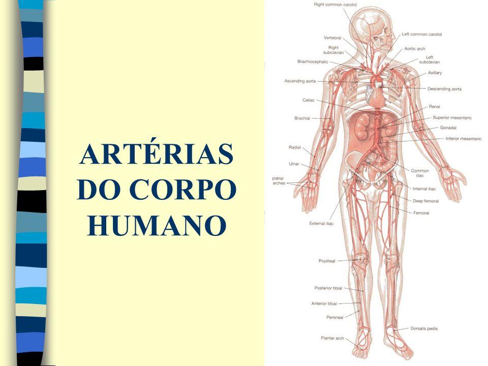 ARTÉRIAS DO CORPO HUMANO