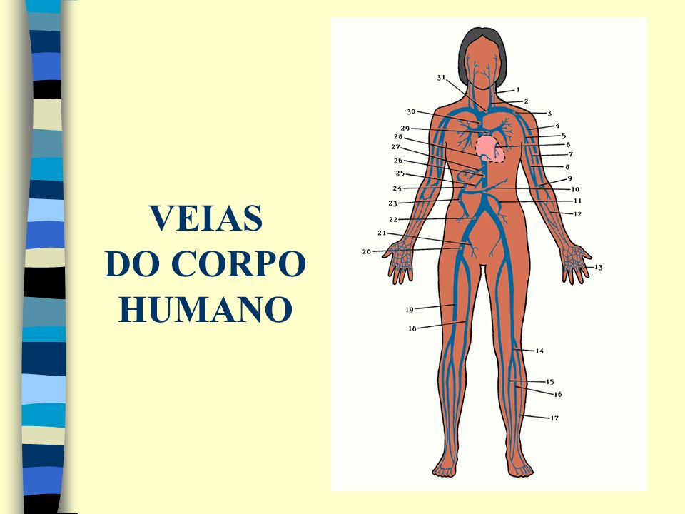 VEIAS DO CORPO HUMANO