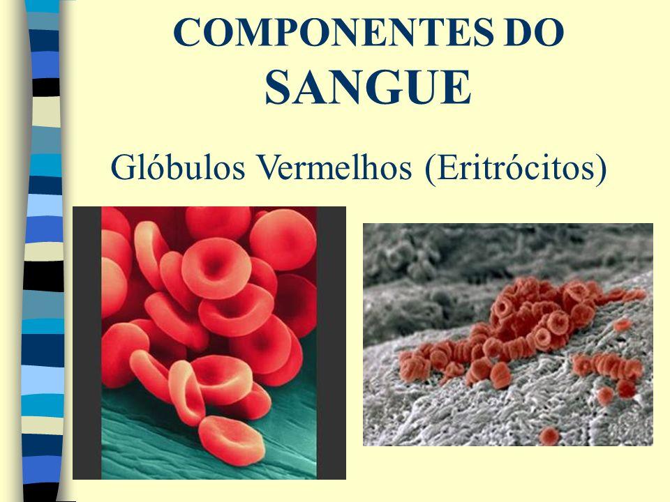 Glóbulos Vermelhos (Eritrócitos)