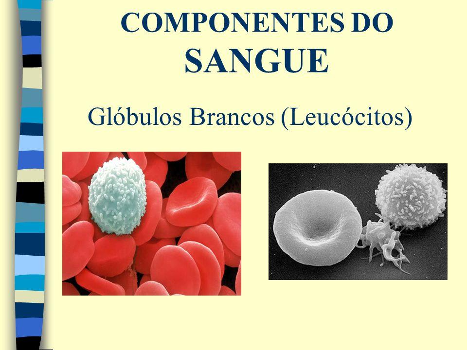 Glóbulos Brancos (Leucócitos)