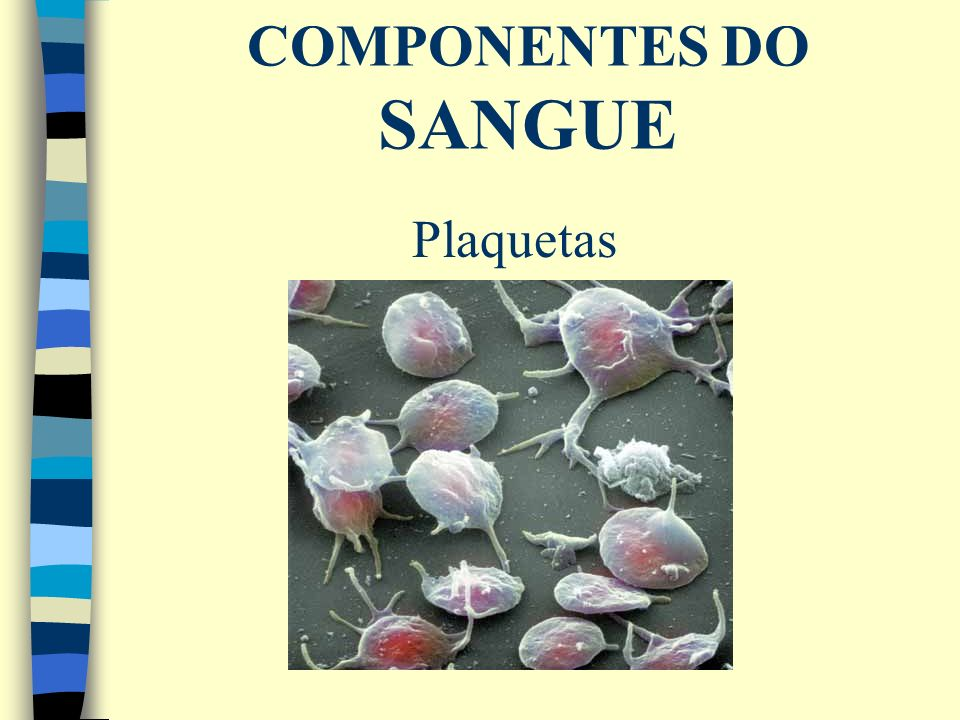 COMPONENTES DO SANGUE Plaquetas