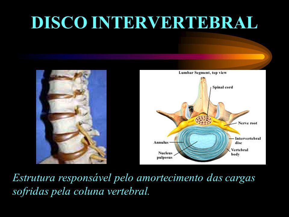 DISCO INTERVERTEBRAL Estrutura responsável pelo amortecimento das cargas sofridas pela coluna vertebral.
