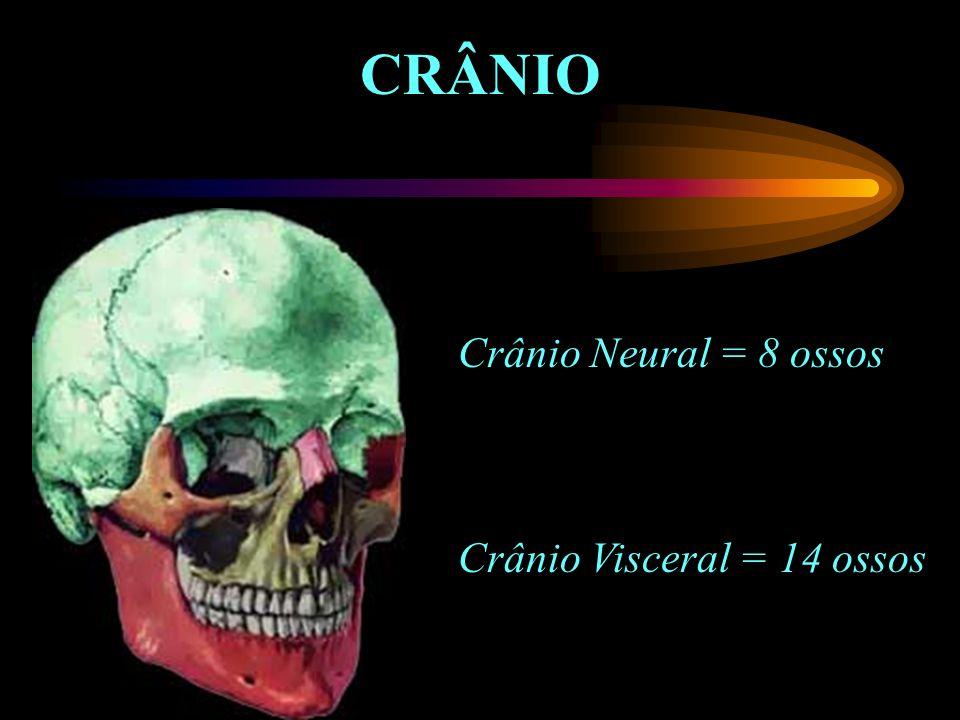 CRÂNIO Crânio Neural = 8 ossos Crânio Visceral = 14 ossos