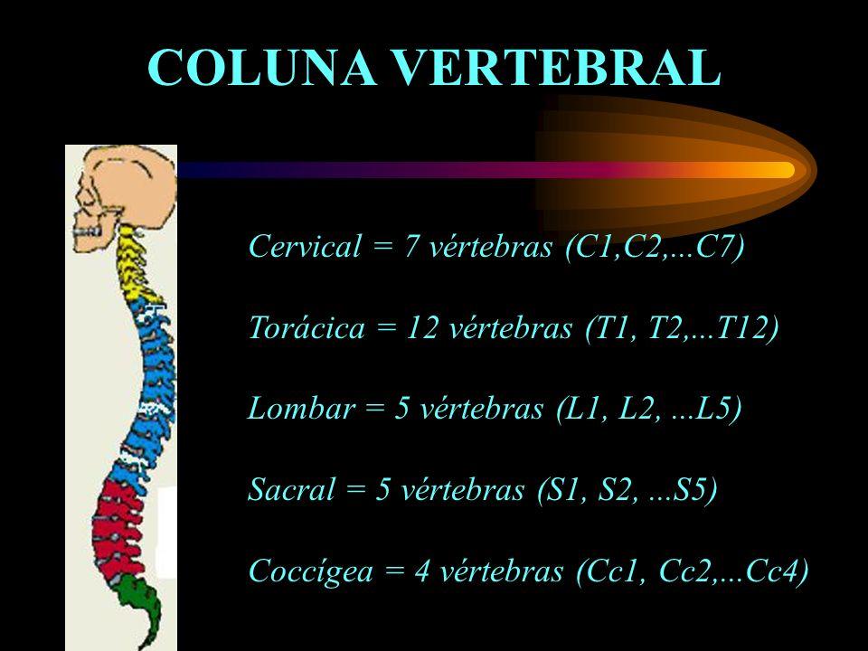 COLUNA VERTEBRAL Cervical = 7 vértebras (C1,C2,...C7)
