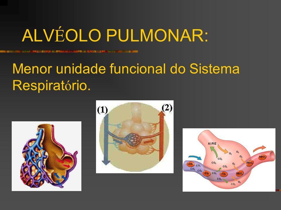 ALVÉOLO PULMONAR: Menor unidade funcional do Sistema Respiratório.